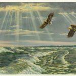 Морские коршуны 150x150 - Птицы