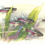 Неоновая рыбка 150x150 - Аквариумные рыбки