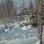 Новогодний пейзаж 150x150 - Пейзажи