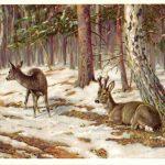 Олени в зимнем лесу  150x150 - Другие животные