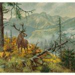 Олень осенью в горах  150x150 - Другие животные