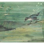 Оляпка 150x150 - Птицы