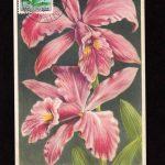 Орхидеи на картмаксимумах 1 150x150 - Цветы