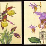 Орхидеи на картмаксимумах 3 150x150 - Цветы