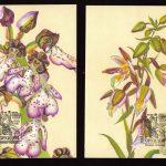 Орхидеи на картмаксимумах 4 150x150 - Цветы