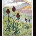 Орхидеи на открытках 0003 150x150 - Цветы