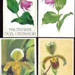 Орхидеи на открытках 0004 150x150 - Цветы