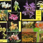 Орхидеи на открытках 0006 150x150 - Цветы