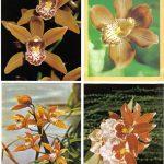 Орхидеи на открытках 0010 150x150 - Цветы