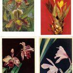 Орхидеи на открытках 0012 150x150 - Цветы