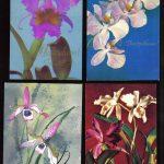 Орхидеи на открытках 0015 150x150 - Цветы