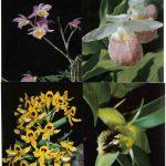 Орхидеи на открытках 0019 150x150 - Цветы