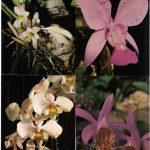 Орхидеи на открытках 0020 150x150 - Цветы