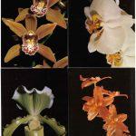 Орхидеи на открытках 0022 150x150 - Цветы