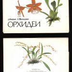 Орхидеи на открытках 0024 150x150 - Цветы