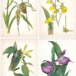 Орхидеи на открытках 0027 150x150 - Цветы