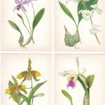 Орхидеи на открытках 0028 150x150 - Цветы