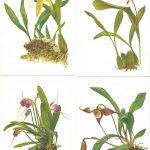 Орхидеи на открытках 0030 150x150 - Цветы