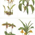 Орхидеи на открытках 0031 150x150 - Цветы
