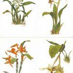 Орхидеи на открытках 0032 150x150 - Цветы