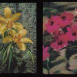 Орхидеи на открытках 0033 150x150 - Цветы