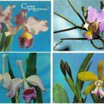 Орхидеи на открытках 0034 150x150 - Цветы
