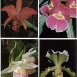 Орхидеи на открытках 0035 150x150 - Цветы