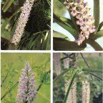 Орхидеи на открытках 0036 150x150 - Цветы