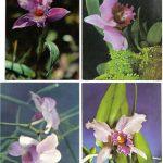 Орхидеи на открытках 0037 150x150 - Цветы
