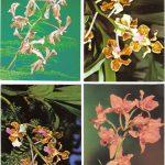 Орхидеи на открытках 0039 150x150 - Цветы
