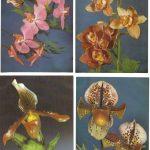 Орхидеи на открытках 0040 150x150 - Цветы