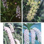 Орхидеи на открытках 0041 150x150 - Цветы