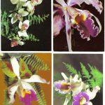Орхидеи на открытках 0042 150x150 - Цветы