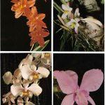 Орхидеи на открытках 0043 150x150 - Цветы