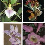 Орхидеи на открытках 0047 150x150 - Цветы