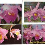 Орхидеи на открытках 0048 150x150 - Цветы