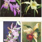 Орхидеи на открытках 0049 150x150 - Цветы