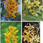Орхидеи на открытках 0052 150x150 - Цветы