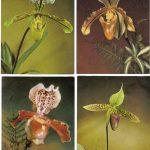Орхидеи на открытках 0053 150x150 - Цветы