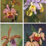 Орхидеи на открытках 0054 150x150 - Цветы