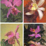 Орхидеи на открытках 0055 150x150 - Цветы