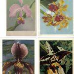 Орхидеи на открытках 0056 150x150 - Цветы