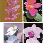 Орхидеи на открытках 0057 150x150 - Цветы
