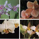 Орхидеи на открытках 0058 150x150 - Цветы