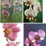 Орхидеи на открытках 0059 150x150 - Цветы