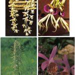 Орхидеи на открытках 0060 150x150 - Цветы