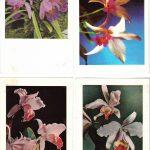 Орхидеи на открытках 0061 150x150 - Цветы