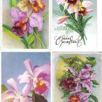 Орхидеи на открытках 0062 150x150 - Цветы