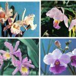 Орхидеи на открытках 0064 150x150 - Цветы