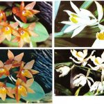 Орхидеи на открытках 0065 150x150 - Цветы